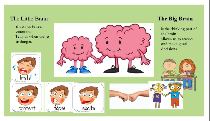 Where The Mind Is Biggest The Heart The Senses: Teaching Kids About The Brain